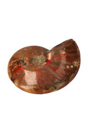 Ammoniet opaal schelp. ammoniet, ammonieten, ammoniet kopen, ammonite, shell, schelp, fossiel, fossil, steen, edelsteen, inktvis, balans, gepolijst, ammoniet geopaliseerd, ammoniet gepolijst