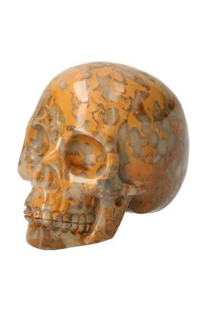 Fossiel koraal kristallen schedel, fossilized coral crystal skull, kopen, arnhem, happy spirit, edelstenen, mineralen, edelsteen