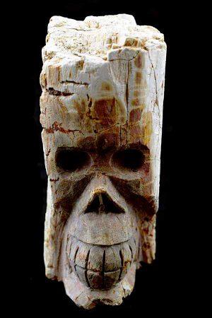 Versteend Hout Boomgeest kristallen schedel, Versteend Hout, boomgeest schedel, petrified wood, crystal skull, kristallen schedel, kopen