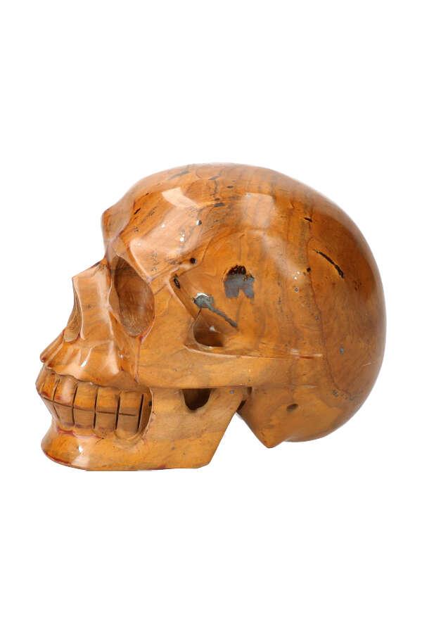 Versteend Hout realistische kristallen schedel, fossilized wood, crystal skull, kopen, fossiel hout