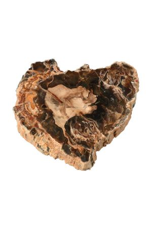 Versteend hout schijf, versteend hout plak, fossilized wood, petrified wood, fossiel hout, kopen, madagaskar
