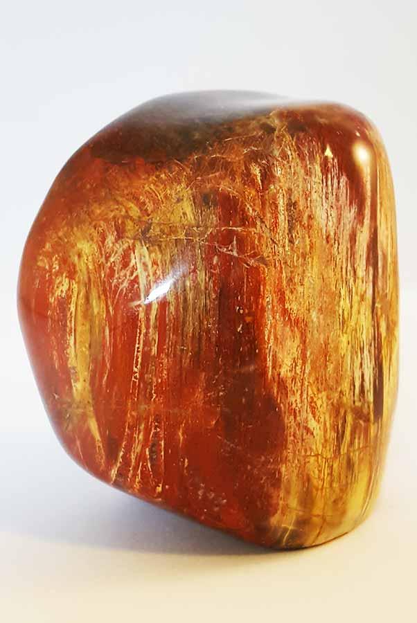 versteend hout gepolijst 8 cm, 517 gram