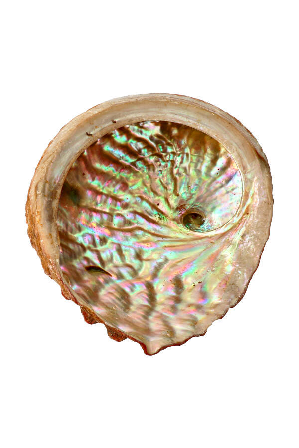 Abalone schelp voor smudge en spirituele energie