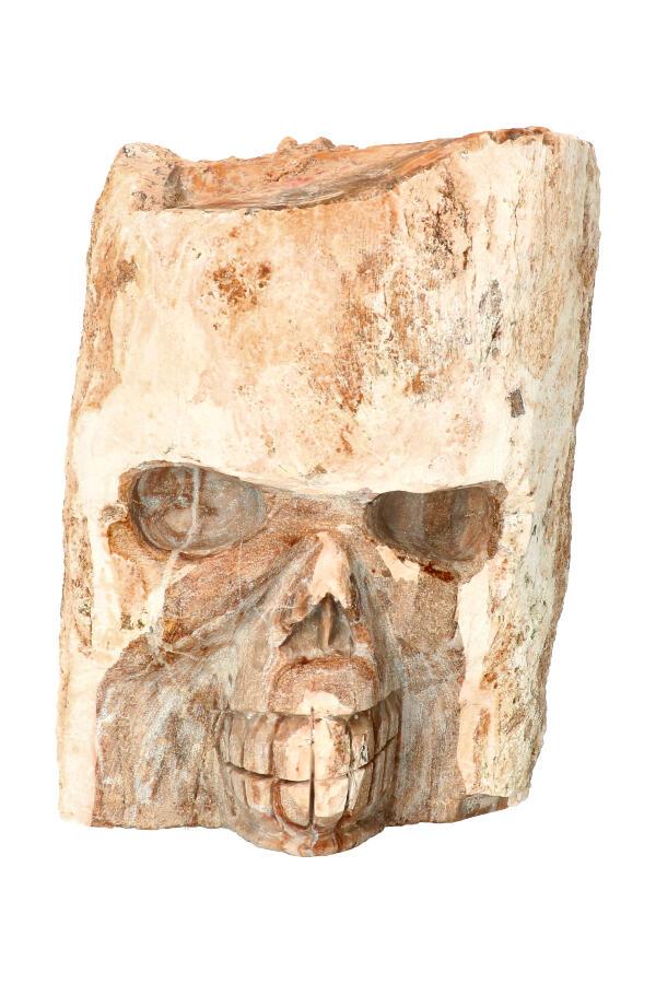 Boomspirit kristallen schedel, Versteend Hout 16,5 cm, 2,42 KG