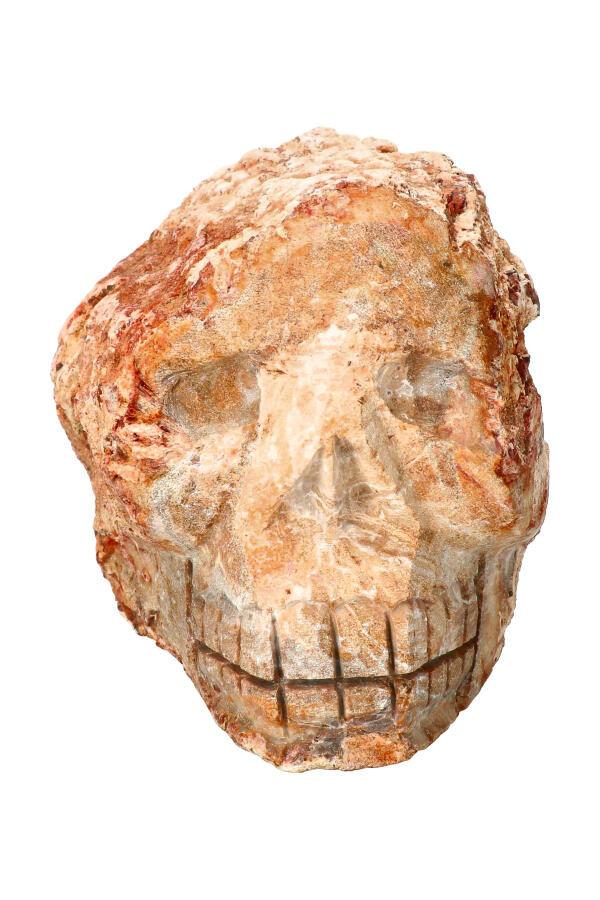 Versteend Hout Boomgeest kristallen schedel, 10,5 cm, 2,29 KG
