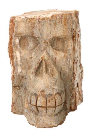 Boom spirit kristallen schedel Versteend Hout crystal skull