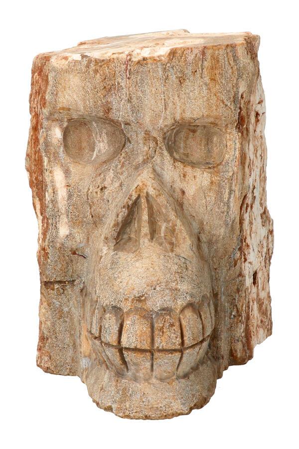 Boomspirit kristallen schedel, Versteend Hout 12,3 cm, 2,07 KG
