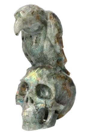 Labradoriet kristallen schedel met raaf