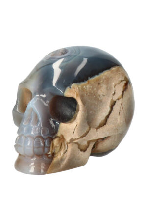 Agaat geode met Dendriet en Carneool en Bergkristal kristallen schedel