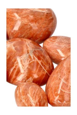 Rosophia palm steen, 30 tot 60 gram, circa 4-5 cm