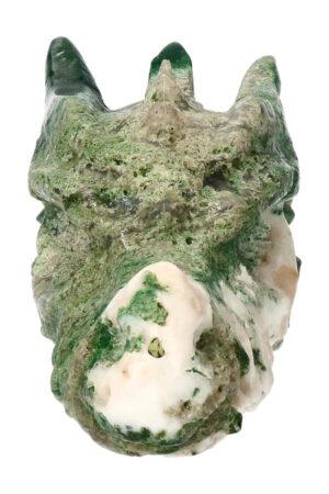 Boomagaat drakenschedel