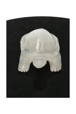 Seleniet schildpad