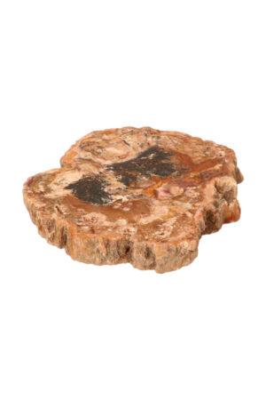 Versteend hout plak