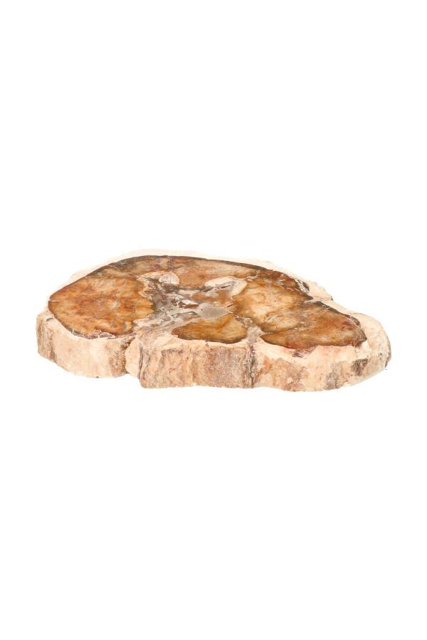 Versteend hout plak 10 cm, 124 gram