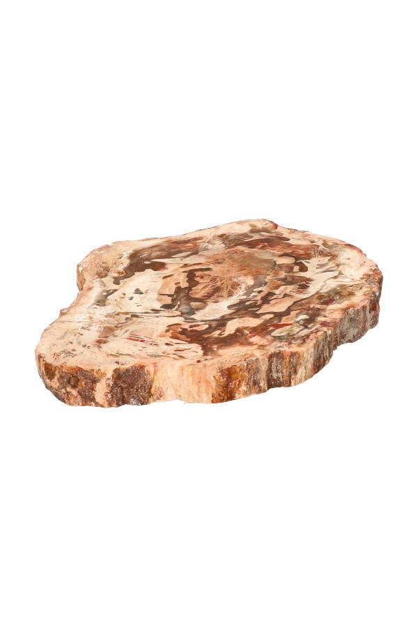 Versteend hout plak 11.5 cm, 217 gram