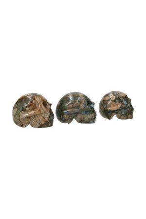 Que Sera schedel 5 cm