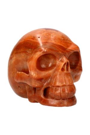 Versteend hout realistische kristallen schedel 10.5 cm 888 gram